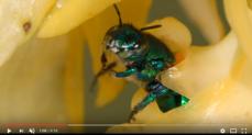 Cute little Bee